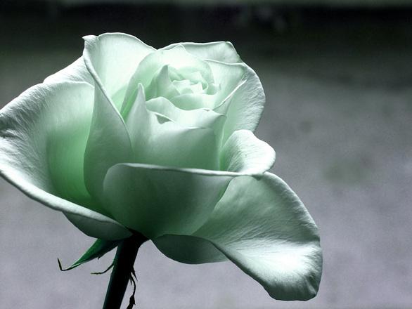 A virágfutár kedvessége fontos